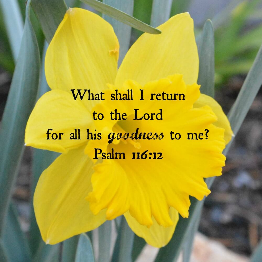 My-heart-His-Words-with-Satin-Pelfrey_psalm-116-12